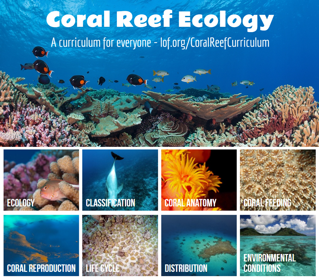 Corals in the Classroom – Part 2 | NAAEE