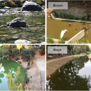 Four photos of different classifications of water: Clear, Brown, Green, Black