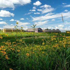 Scenic view of the Prairie Wetlands Learning Center on a gorgeous summer day with a blue sky, white puffy clouds, and green tall grasses with yellow sunflowers.  Photo credit:  Eric Strand