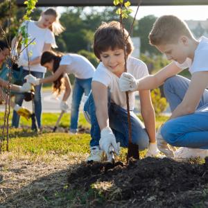 Middle school students planting trees