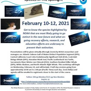 Virtual Workshop: Species in the Spotlight. February 10–12, 2021.