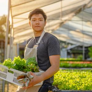 Young adult holding carton of harvested lettuce and gloves.