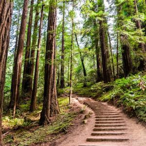Steps along trail in Muir Woods.