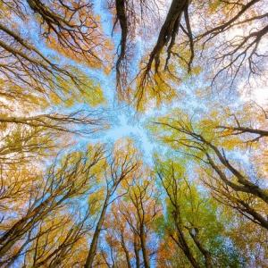 Worm's eye view looking up at a colorful tree canopy