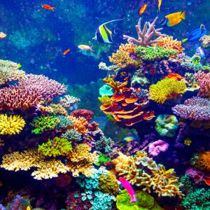 A colorful picture of a corral reef with fish.