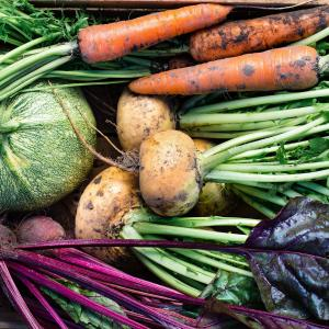 Freshly harvested squash, beets, carrots, and turnips.