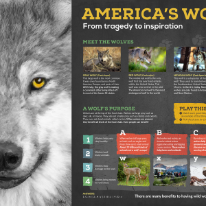 Panel 1 of America's Wolves Exhibit