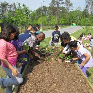 School Garden NOAA Climate Stewards