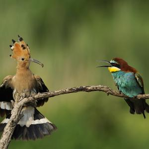 Two birds sitting on a branch