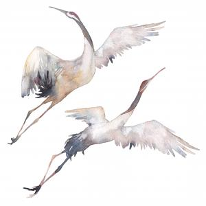 two watercolor cranes flying