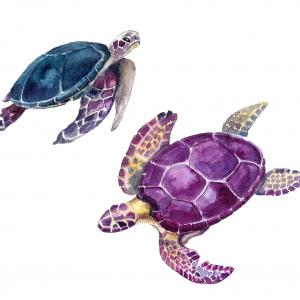 one blue and one purple watercolor turtle