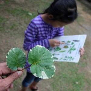 Young student looking at book with hand holding leaf