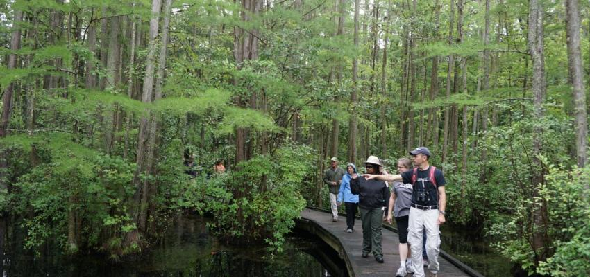 A group of environmental educators explore a wetlands ecosystem during a conference field trip.